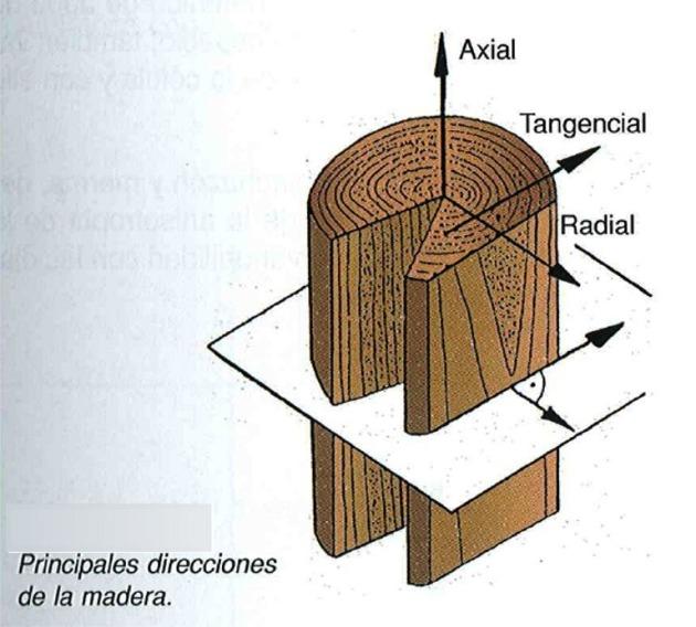 Principales direcciones de la madera for La beta de la madera