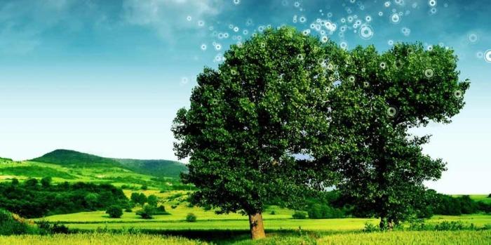 Obligaciones Medioambientales 2017