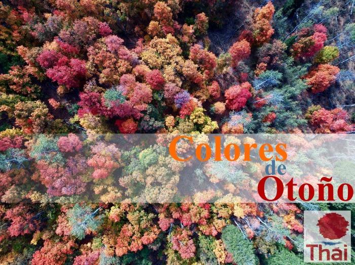 Otoño | Autumn |2017