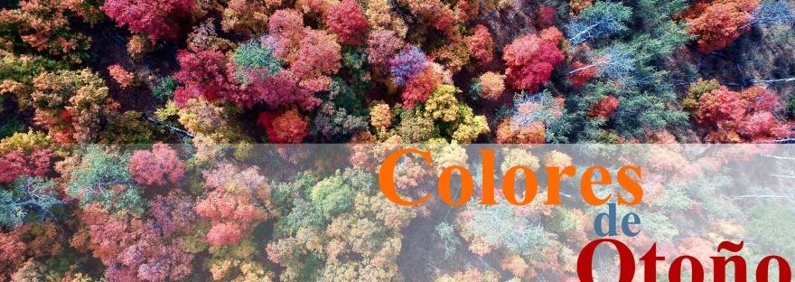 QT Colores De Otoño 2017